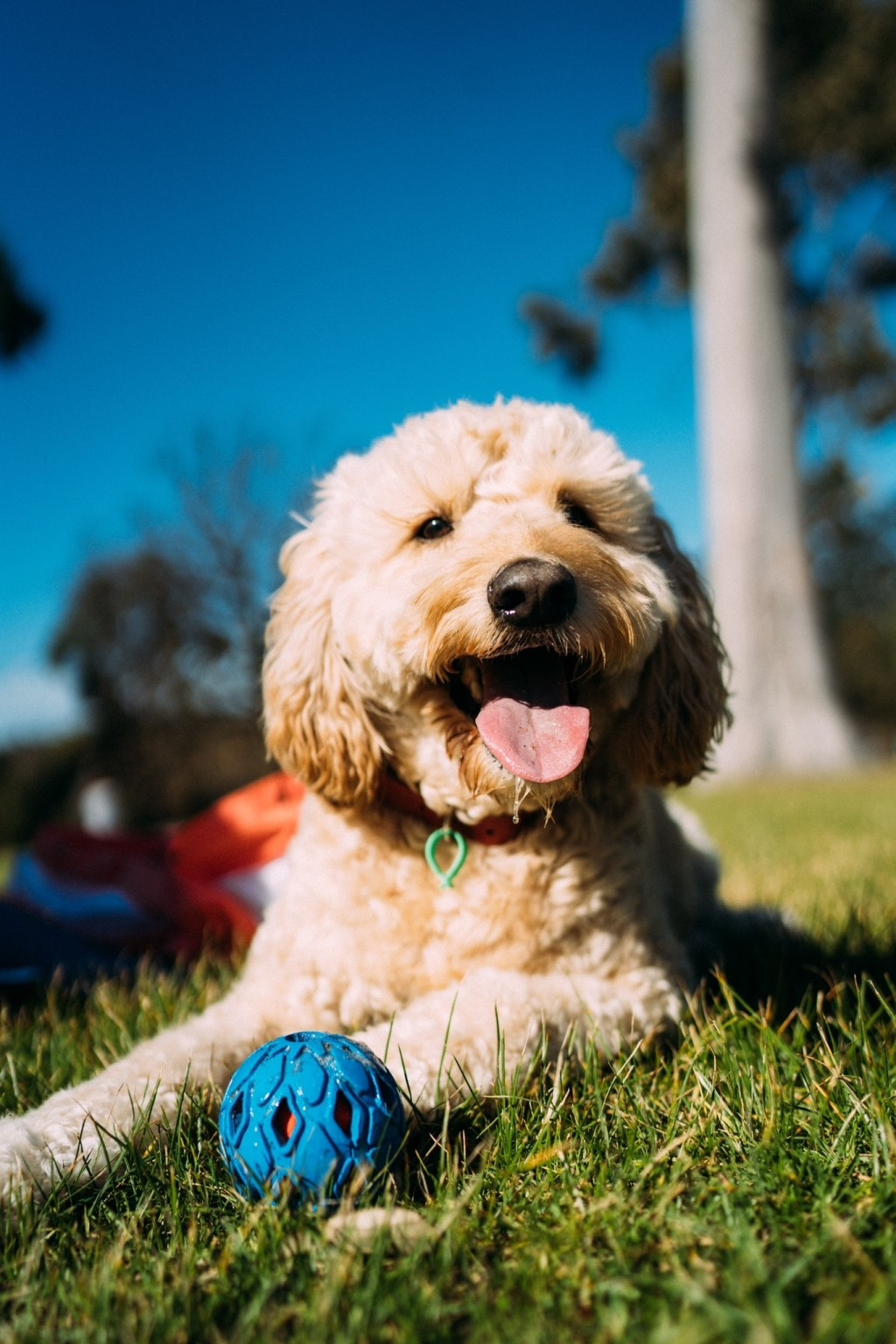 Your pets stay with us - keeping them happy.